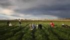 Migrantes agrícolas ante el riesgo de contagio de covid-19