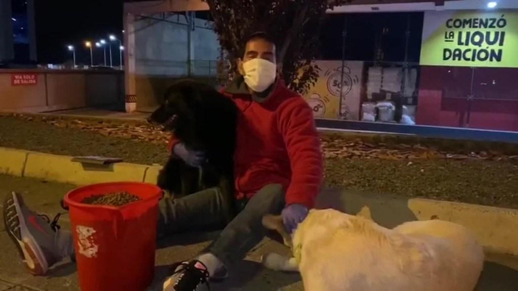 Un hombre se dedica a alimentar perros callejeros en la cuarentena