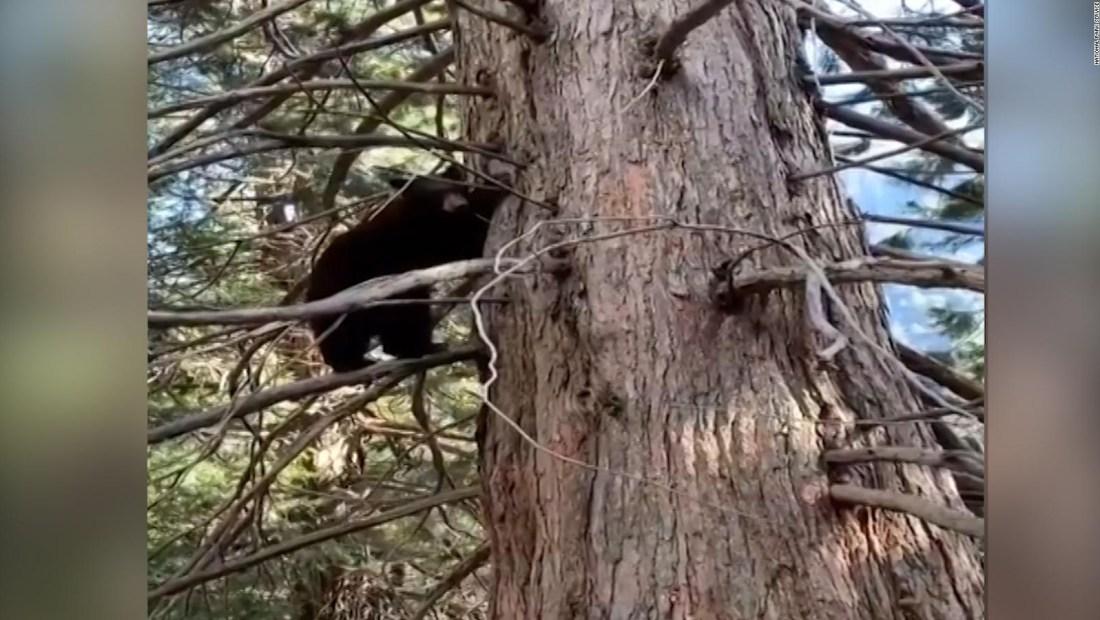 Estos osos la pasan en grande sin visitantes