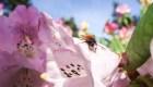 ¿Los insectos están en peligro?