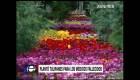 Un jardín para honrar a los médicos y enfermeros que murieron por coronavirus