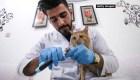 Covid-19 en mascotas y otros animales, ¿qué sabemos?