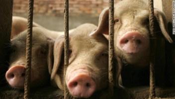 El gobierno chino revela un borrador de la lista de animales que pueden criarse para carne