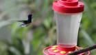 Los colibríes de Colombia, afectados por la pandemia