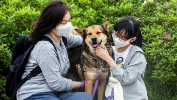 Adopciones y abandono de mascotas durante la pandemia