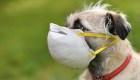 Las mascotas y el coronavirus