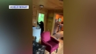 Un oso irrumpe en una cabaña para robar caramelos