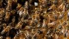 ¡Ojo con las abejas!