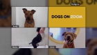 Conoce a tu nuevo perrito por Zoom