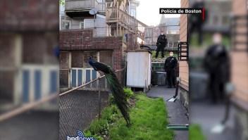 Policía de Boston realiza inusual rescate