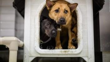 Coronavirus: mascotas desprotegidas si mueren sus dueños