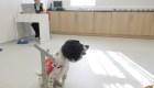 Estos perros entrenan para oler el covid-19