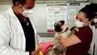 Un perro asiste emocionalmente al personal médico