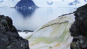 El cambio climático podría empeorar la nieve verde en la Antártida