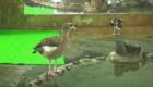 Explosión de natalidad en zoológico de Siberia