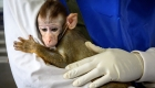 Los animales no se contagian de Covid-19 por esta razón.