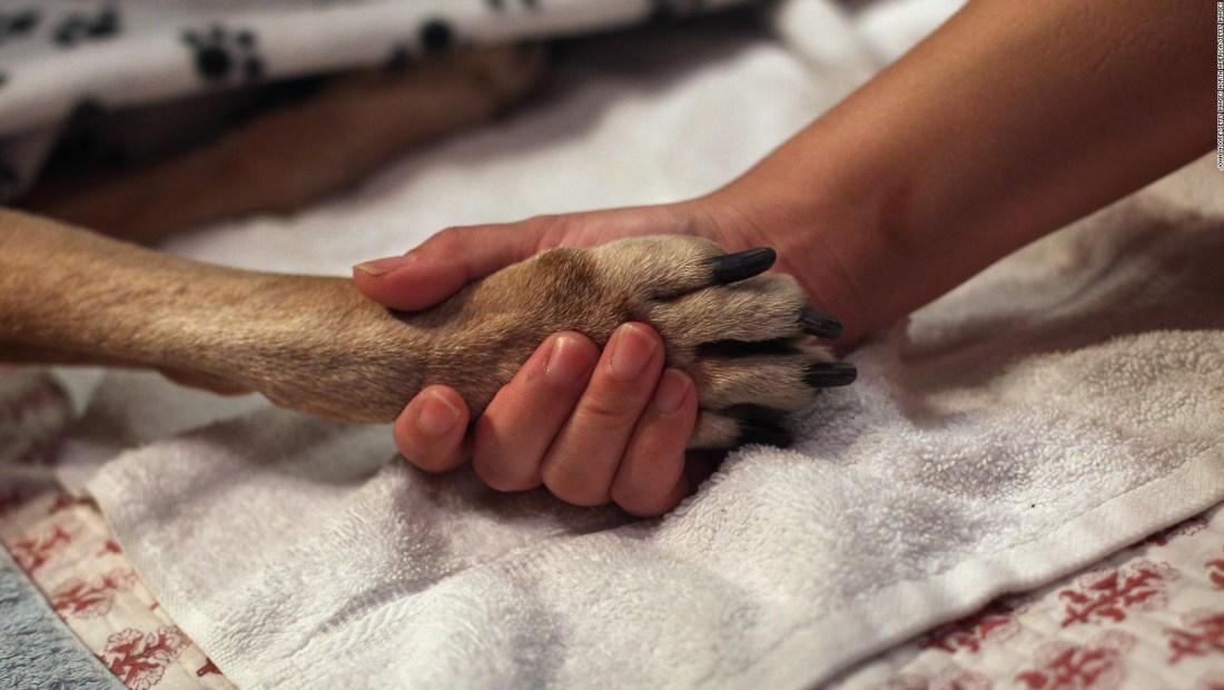 ¿Qué hacer y qué evitar al asistir a los animales?