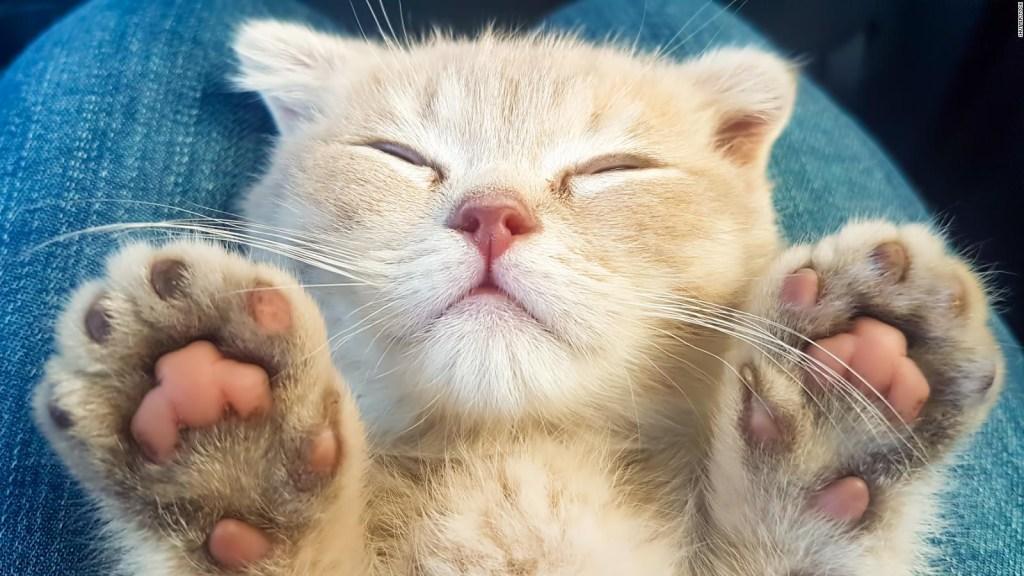 Mujeres asocian a los gatos con menor masculinidad