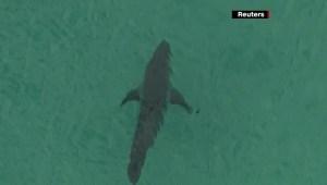 Australia: Muere surfista por presunto ataque de tiburón