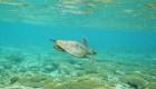 Miles de tortugas marinas llegan a Australia