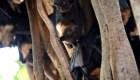 La relación de los murciélagos y el covid-19