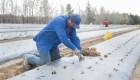 México pausa envío de trabajadores a Canadá