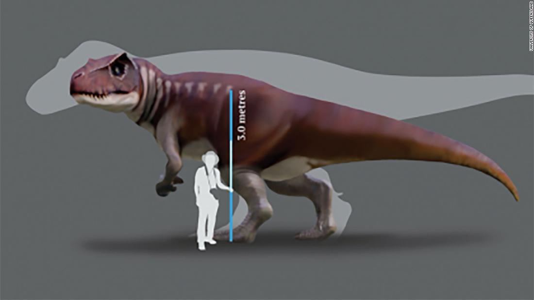 Dinosaurio carnívoro - Australia