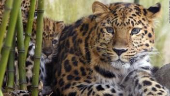 La sexta extinción masiva está ocurriendo más rápido de lo esperado. Los científicos dicen que es nuestra culpa