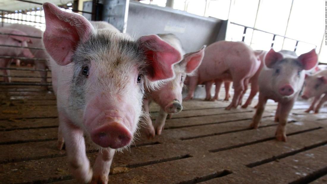 ¿Cuántos muertos dejó la gripe porcina en 2009?