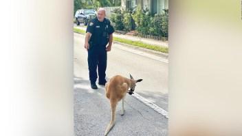 """""""Detienen"""" a canguro en Florida"""