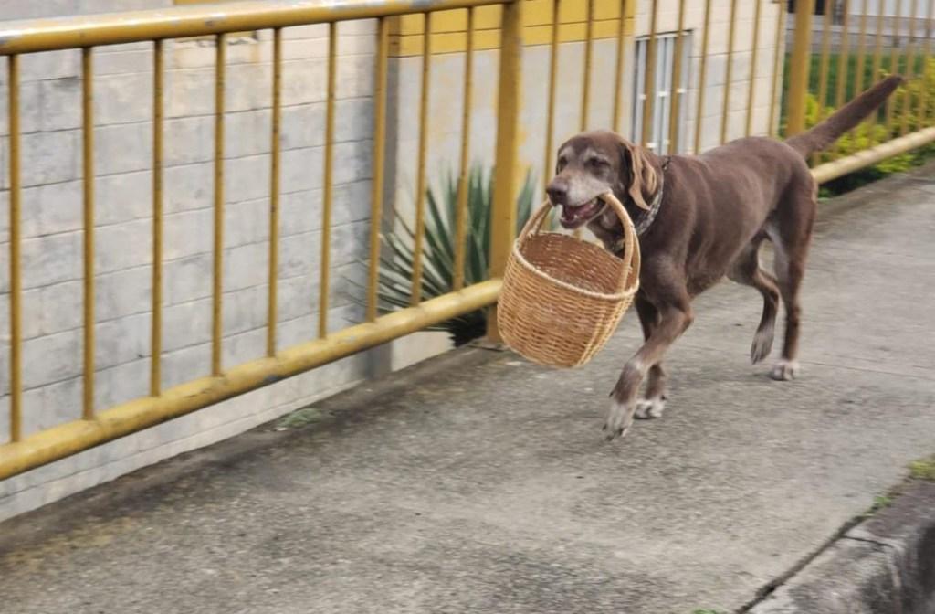 El perrito repartidor durante la cuarentena en Colombia
