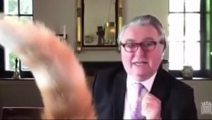 La interrupción de un gato en el Parlamento británico