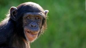 Camilo: El sufrimiento de los animales