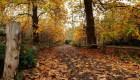 Árboles perderían sus hojas antes por el cambio climático