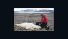 Estudian impacto del cambio climático en osos polares
