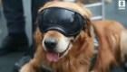 Perros se jubilan de la Fiscalía de Colombia