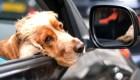 5 cosas: 4 casos de covid-19 en perros en México
