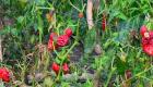 Agricultores en Nicaragua sufren estragos de Iota y Eta