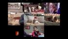 Una terapia canina virtual
