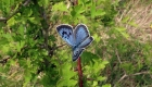 Biólogos revelan cómo vuelan las mariposas