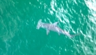 Avistan tiburón martillo en costas de la Florida