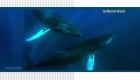 Reconecta con el mar dominicano y las ballenas jorobadas