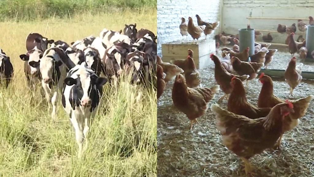 Chile prueba modelos de ganadería regenerativa