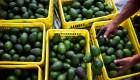México duplicó su venta de aguacate para el Super Bowl pese al covid-19