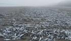 Aparecen miles de peces muertos en playa de Chile