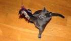 Evita que tu gato mate vida silvestre con este consejo