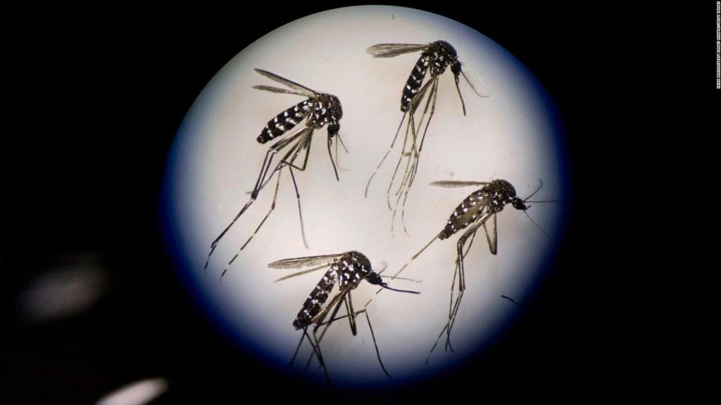 ¿Pueden los mosquitos transmitir el covid-19?