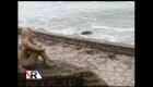Misteriosa aparición de una escultura en Mar del Plata