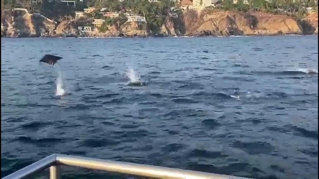 Un grupo de mantarrayas sorprende a turistas en Acapulco