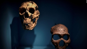 Encuentran que los neandertales hablaban como los humanos